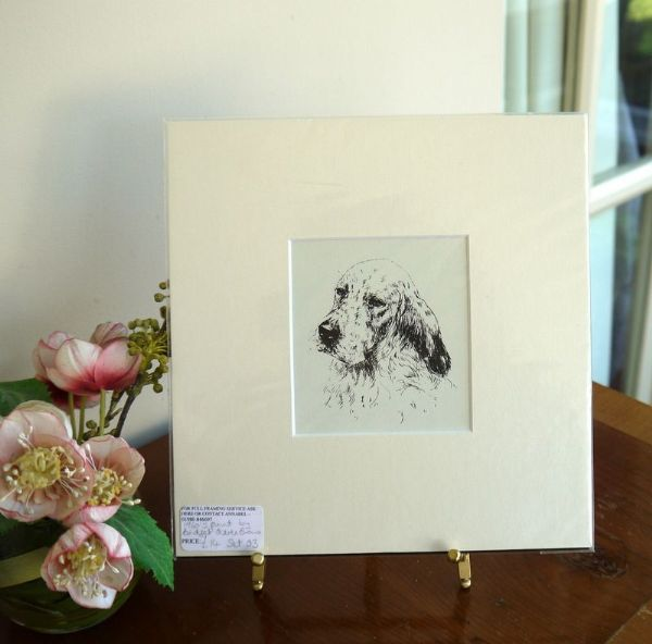 English Setter - head 1960's print by Bridget Olerenshaw - Set O3